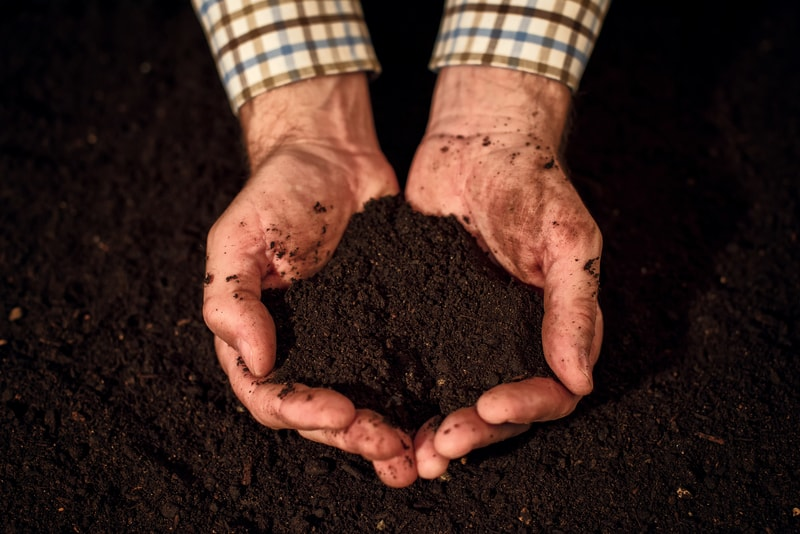 Choosing the Right Soil for Your Indoor Garden
